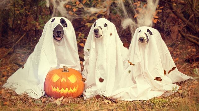 Halloween Homeopathy